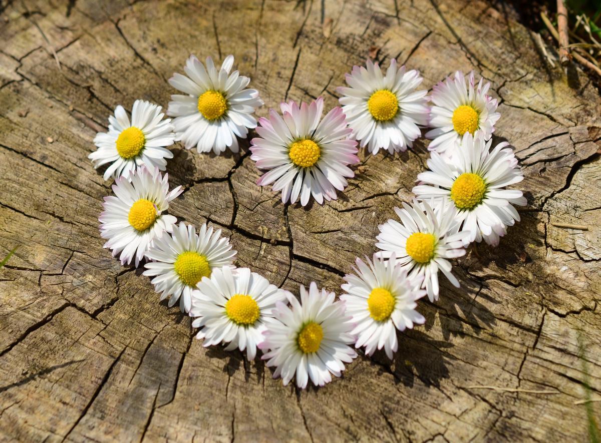 Liebe Herz Blumen Frühling #32444