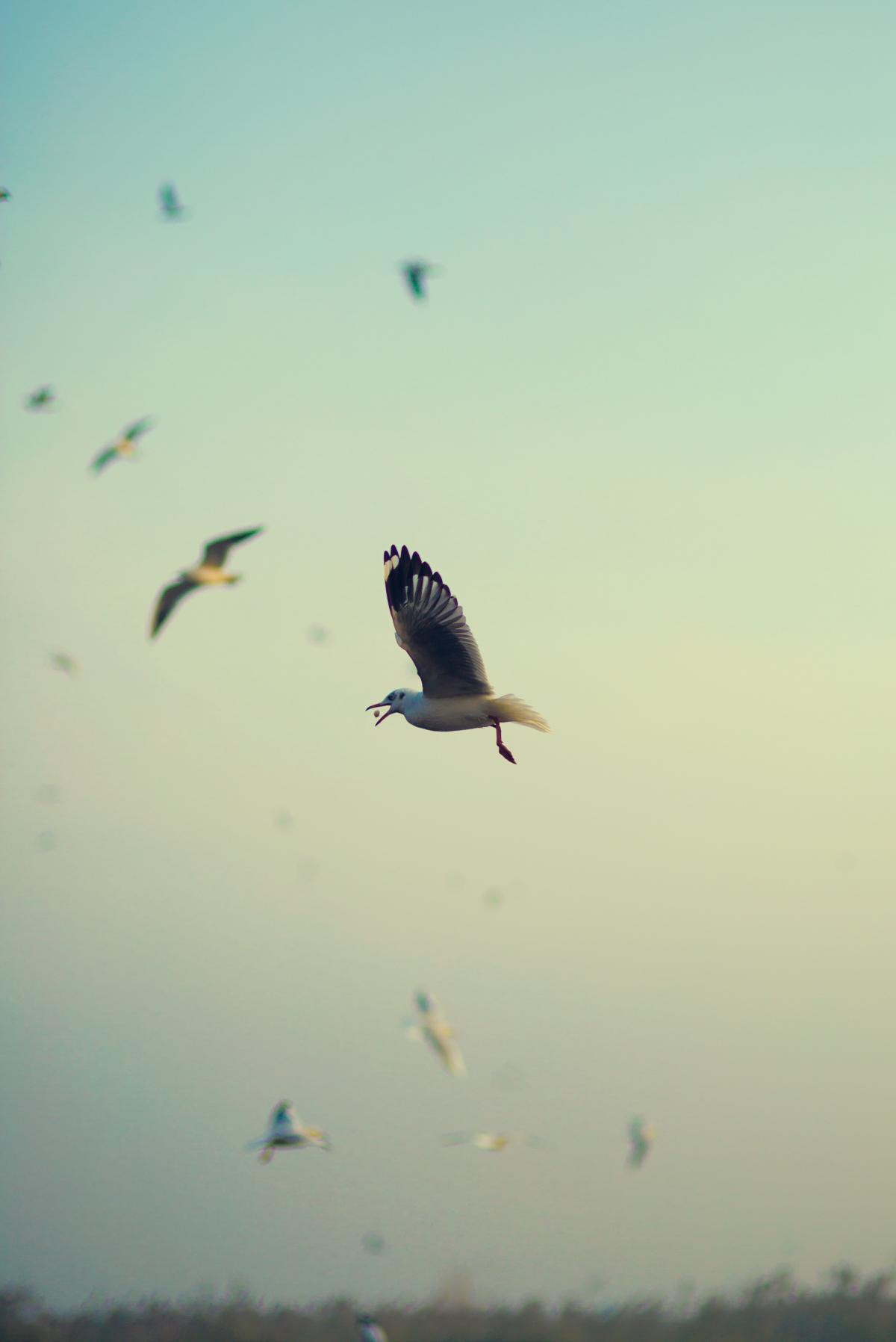 Bird Hawk Kite #324956