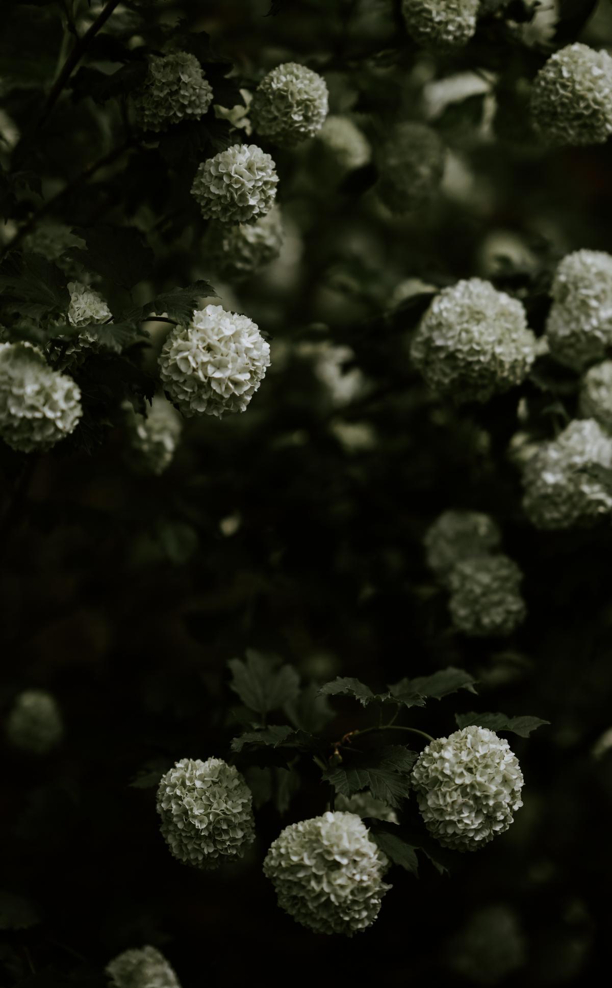 Herb Yarrow Vascular plant #325281