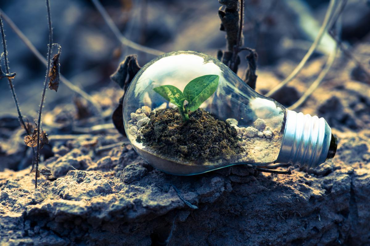 Clear Light Bulb Planter on Gray Rock