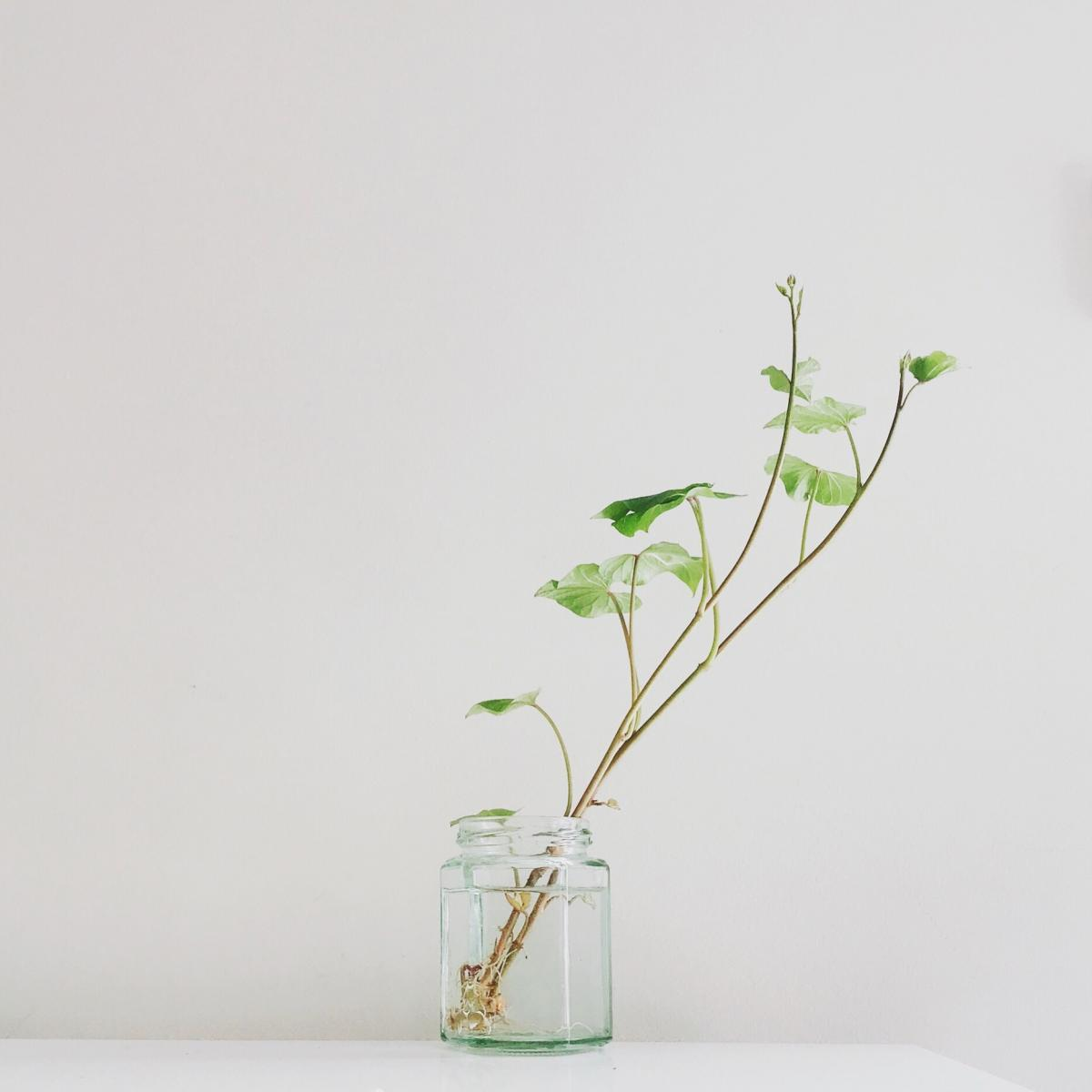 Plant Leaf Seedling