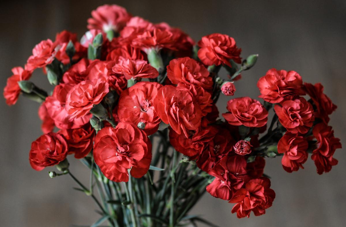 Red Petaled Flowers #35038