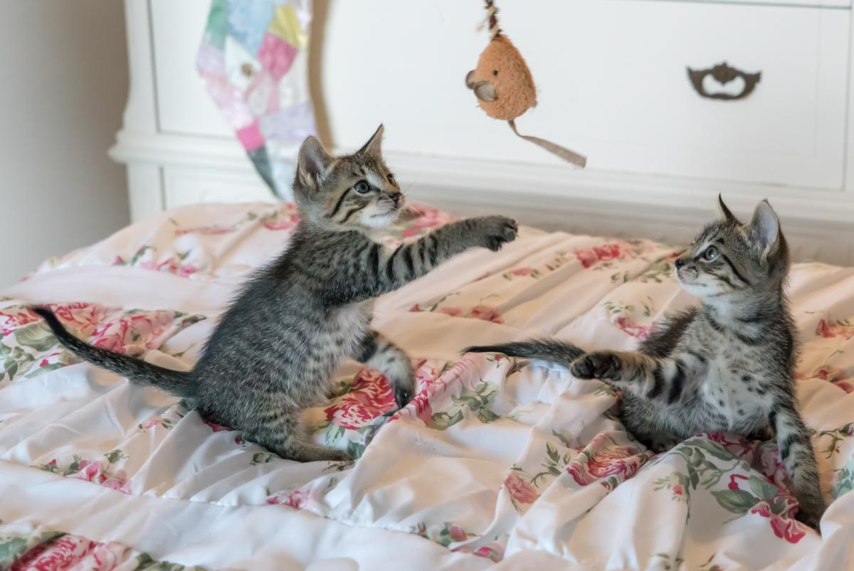 Tabby Kittens on Floral Comforter #35391