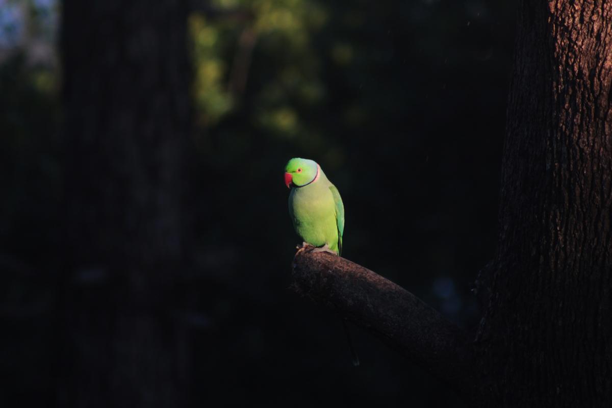 Bird Goldfinch Finch #354816
