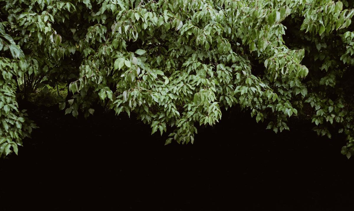 Tree Woody plant Vascular plant #355073