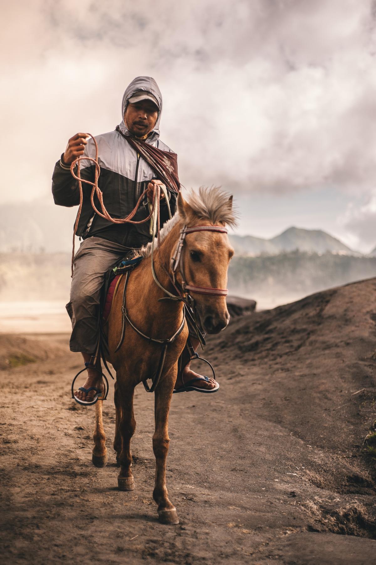 Horse Cowboy Animal