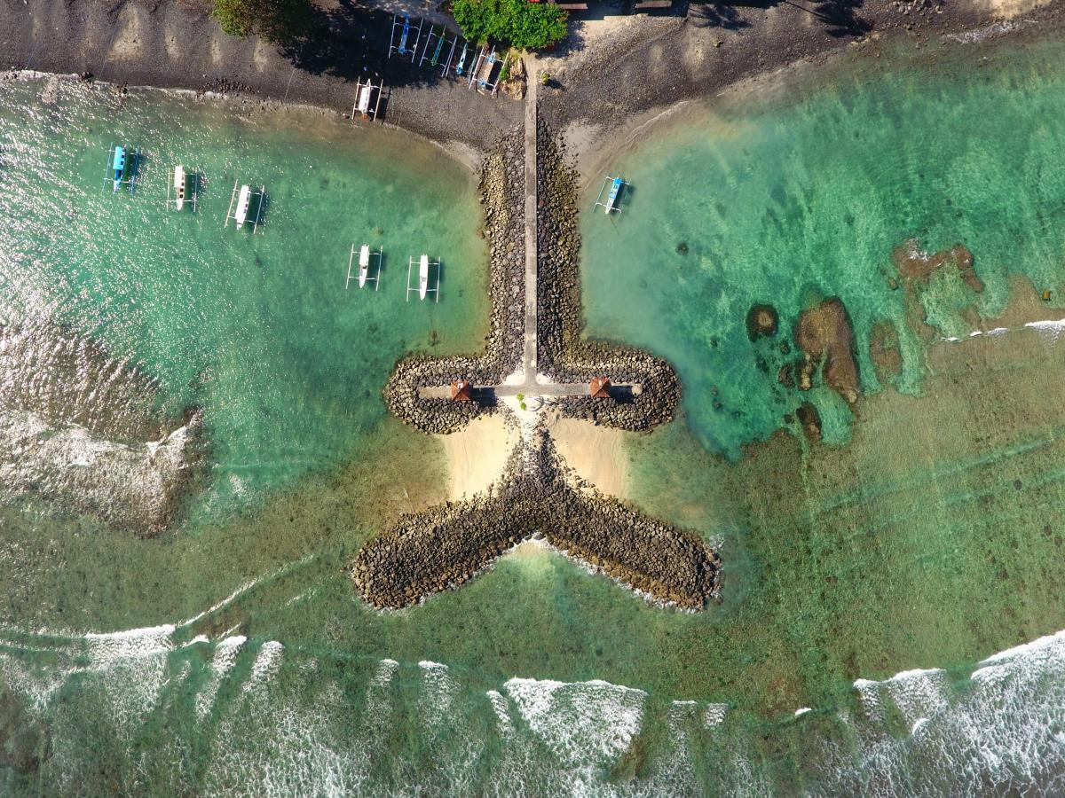 Starfish Echinoderm Invertebrate