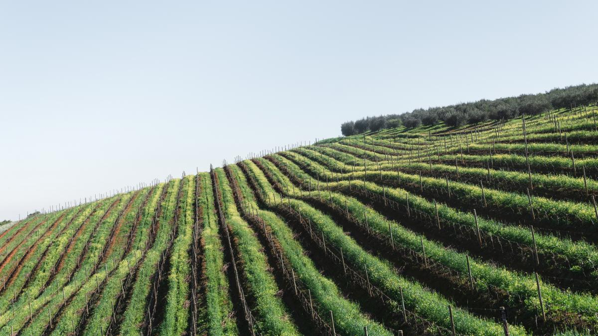 Highland Agriculture Rural #369702