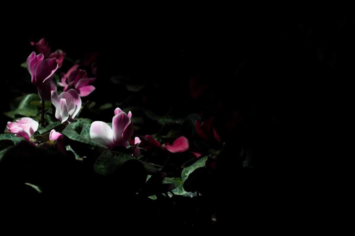 Flower Plant Petal #374241