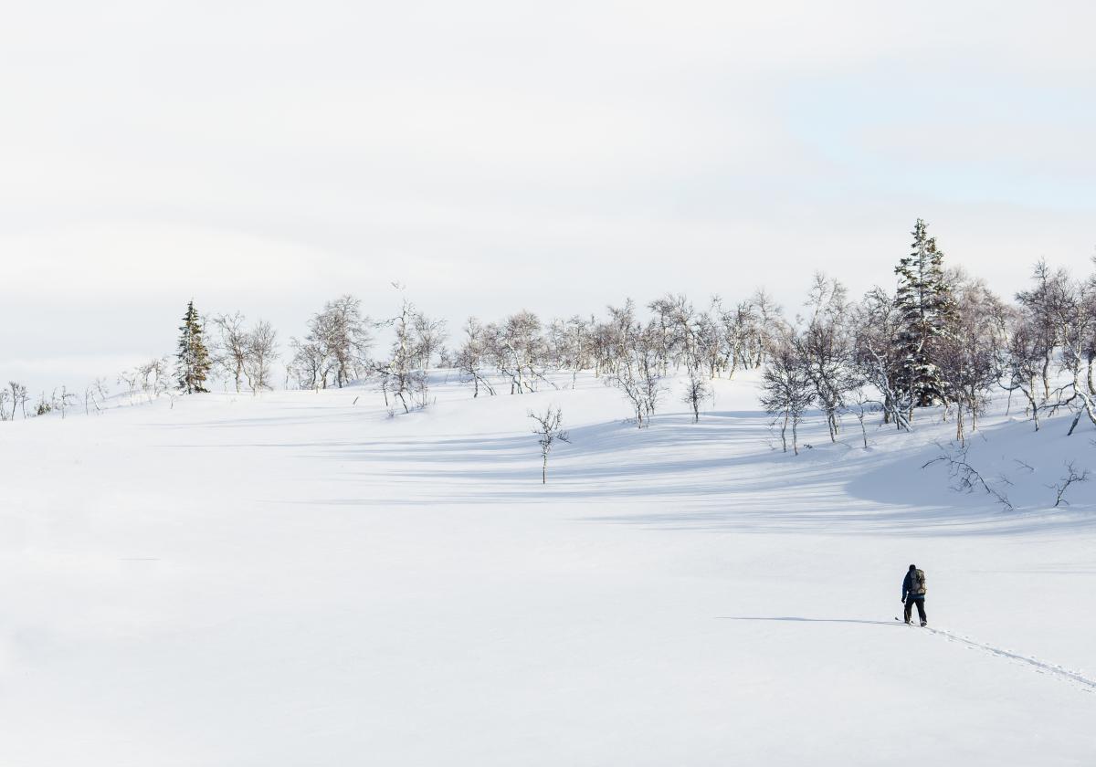 Winter snow cold trees