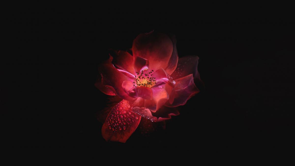Petal Flower Shrub #378444