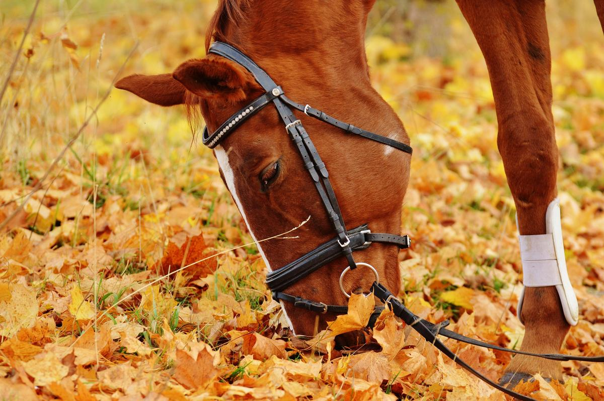 Brown Horse Eating
