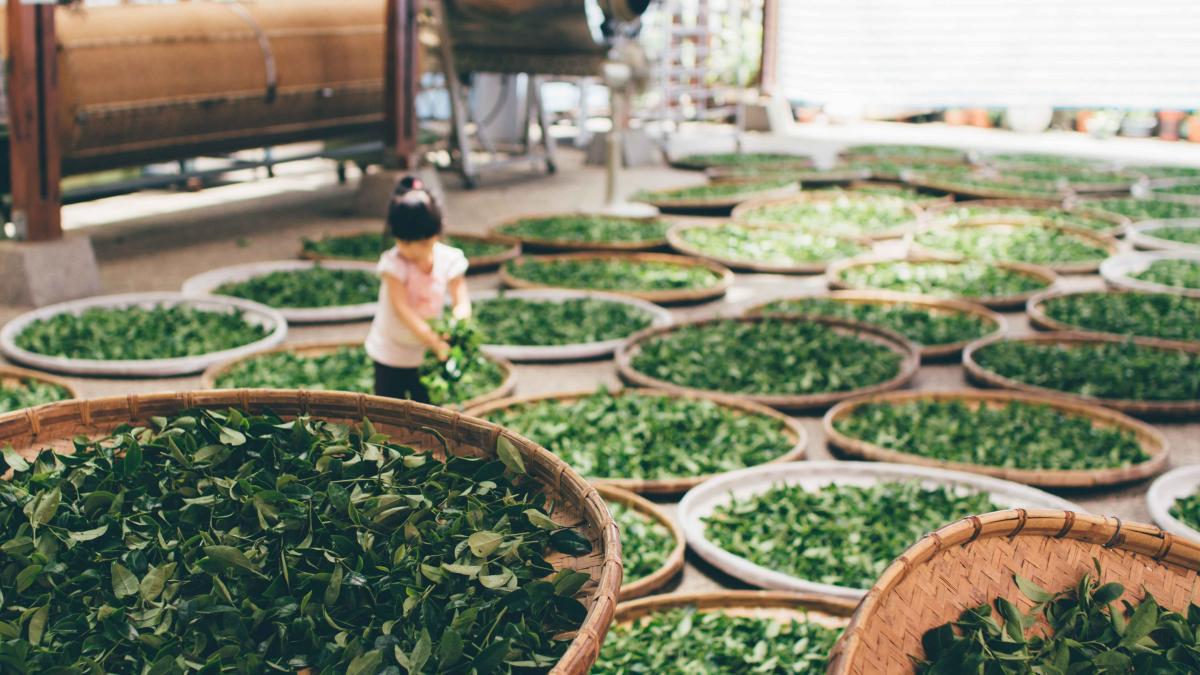 Tea Maze Garden