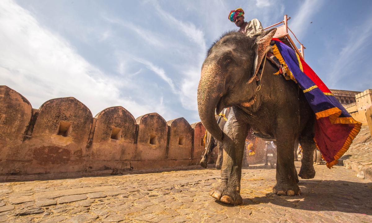 Man Riding Elephant on Street during Daytime