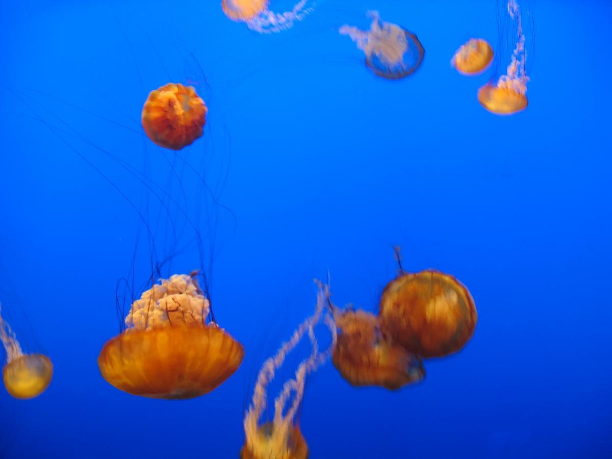Jellyfish Invertebrate Animal #382696