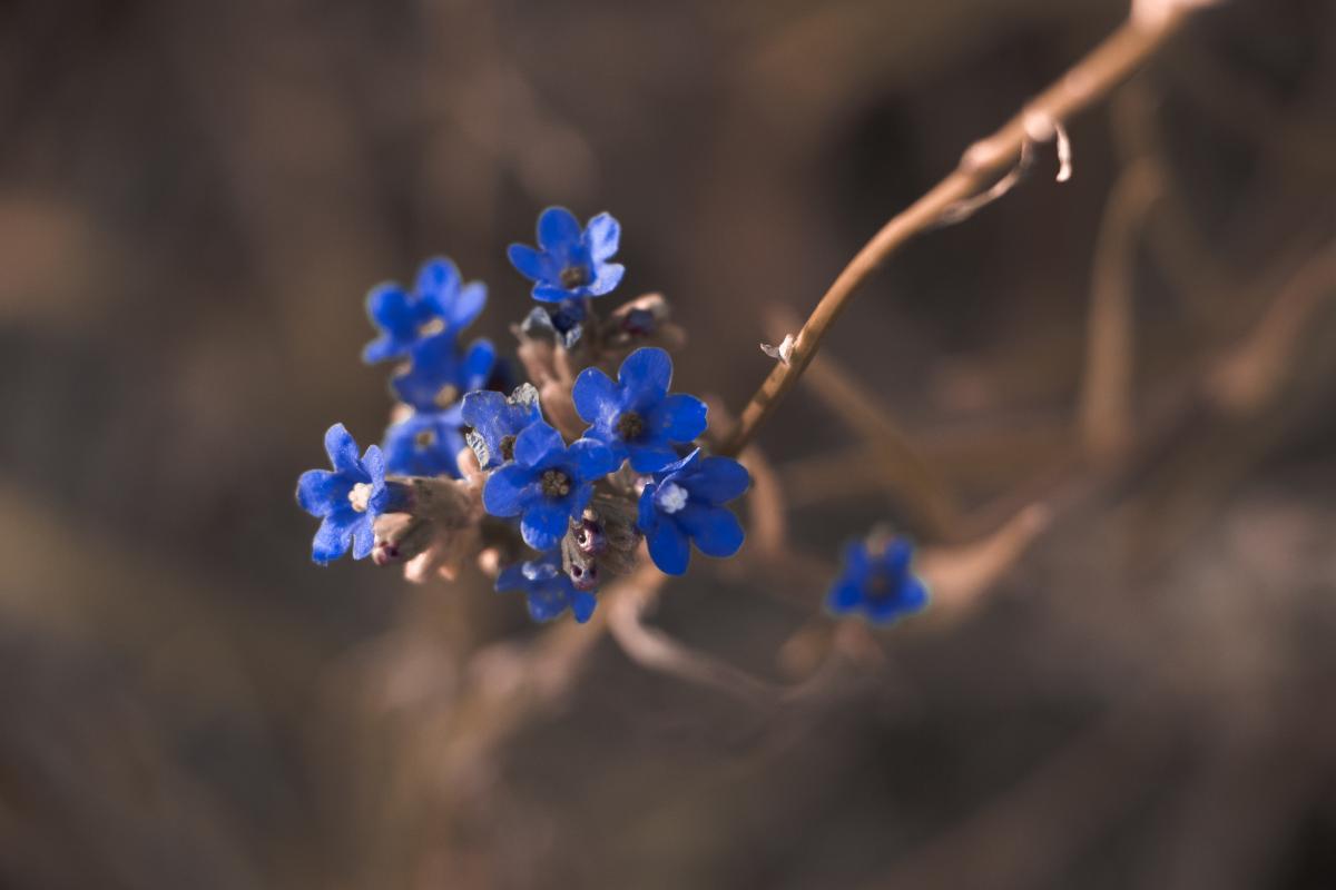 Macro Photography of Blue Petaled Flower #38554