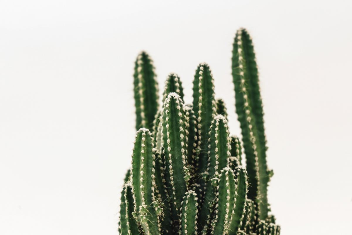 Close up of a small cactus