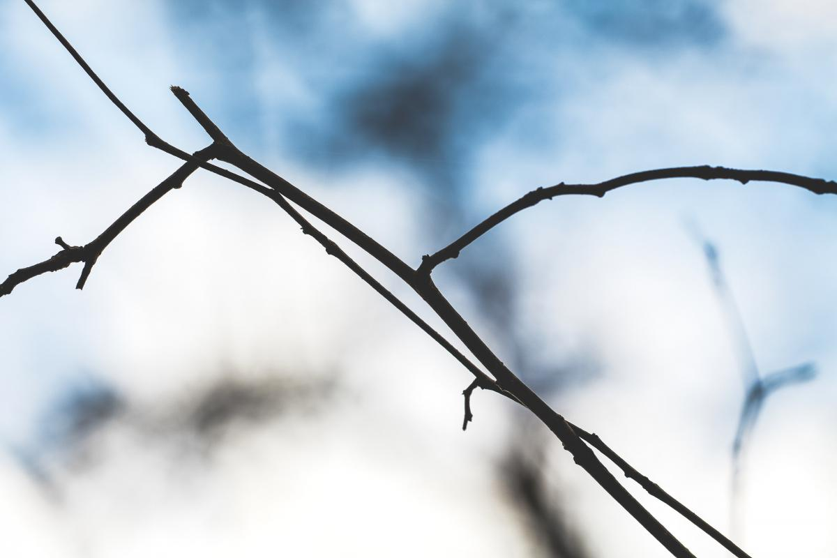 Brown branch under the blue sky
