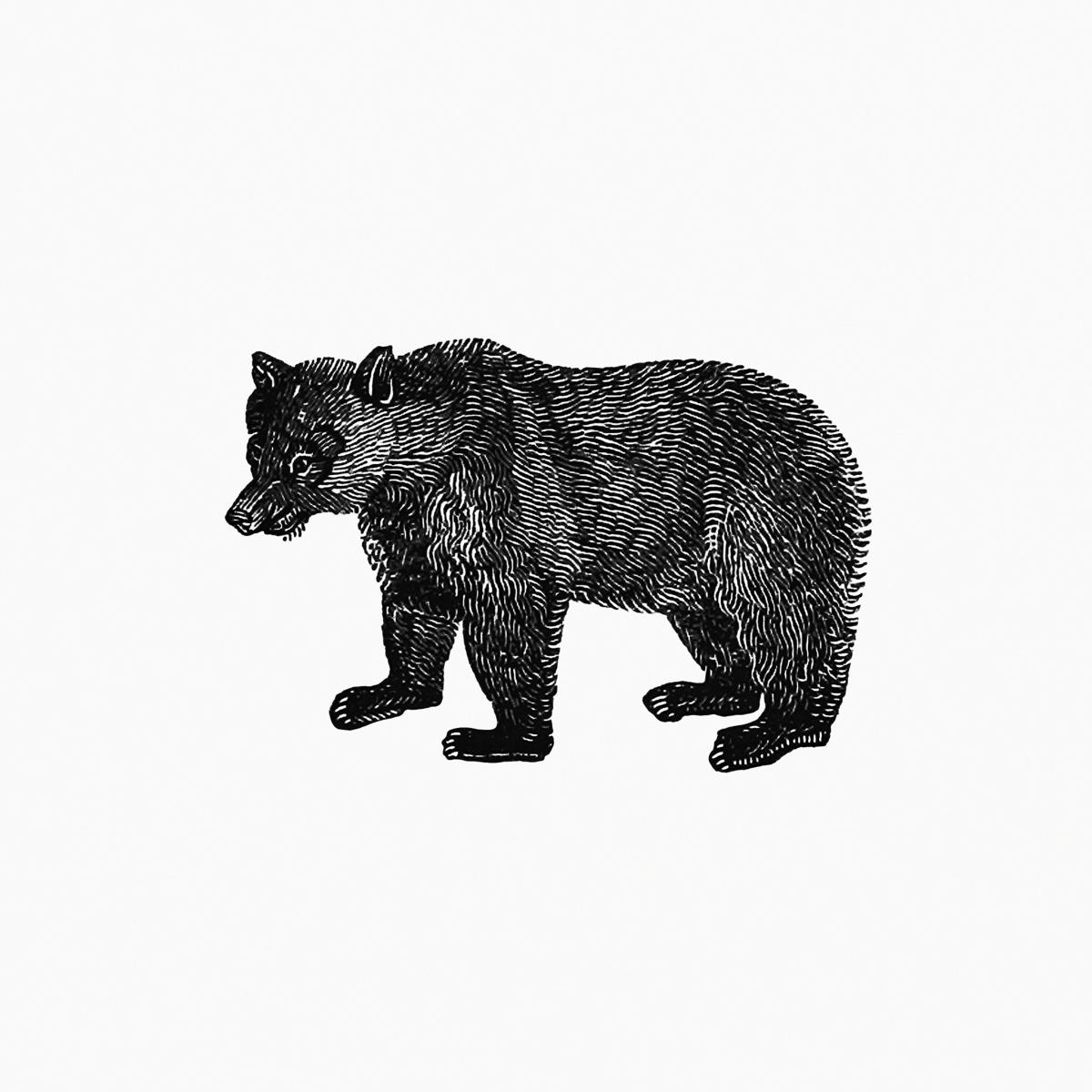 Vintage European style bear engraving from The Polar Regions Of The Western Continent Explored; Embracing A Geographical Account of Iceland, Greenland, The Islands of The Frozen Sea, and The Northern Parts of The American Continent by William Joseph Snell