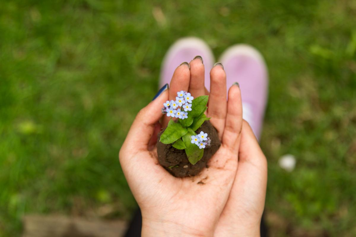 Person Holding White Flower Plant