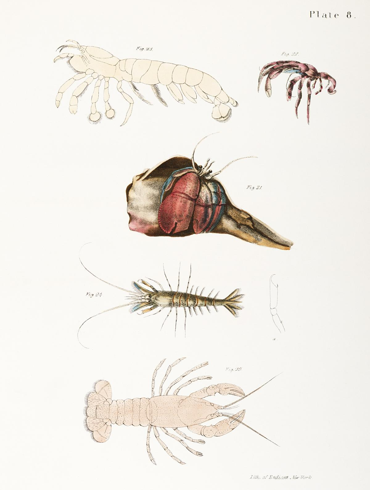 Different types of sea creatures illustration from Zoology of New York (1842–1844) by James Ellsworth De Kay. Original from The New York Public Library.  #397308
