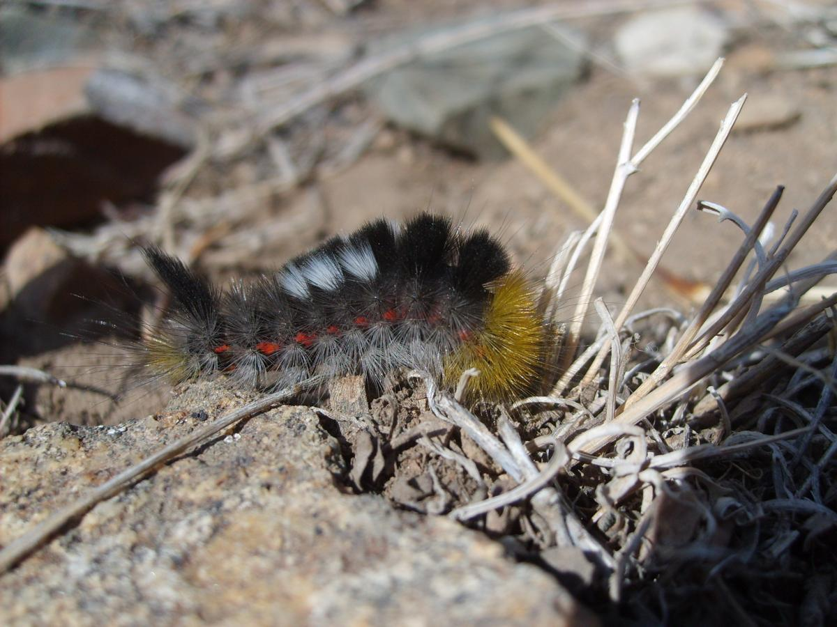 Caterpillar in mongolian steppe - free stock photo #401171