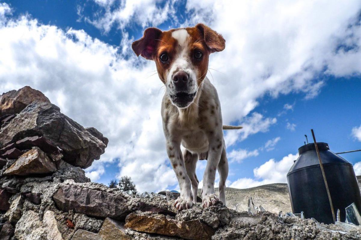 Small Dog White Brown Free Photo #403296