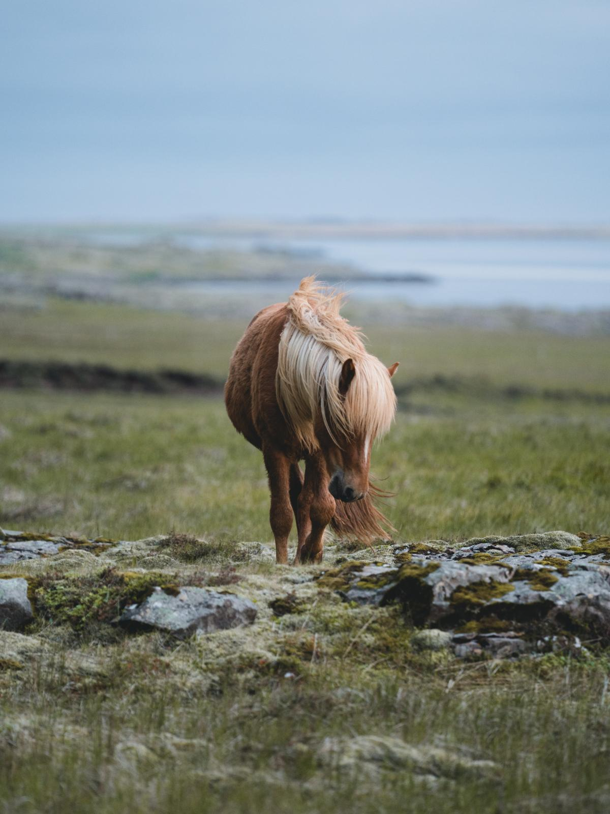 Steppe Plain Land