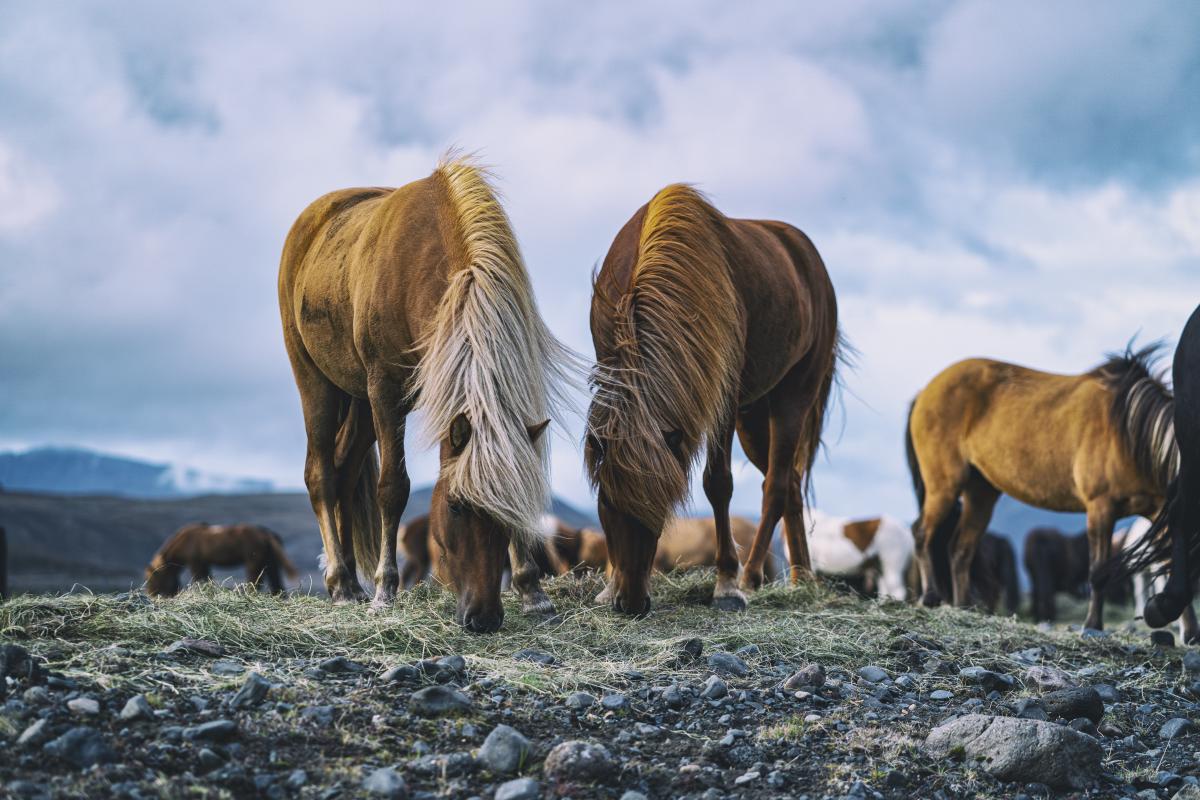 Cow Pasture Horse
