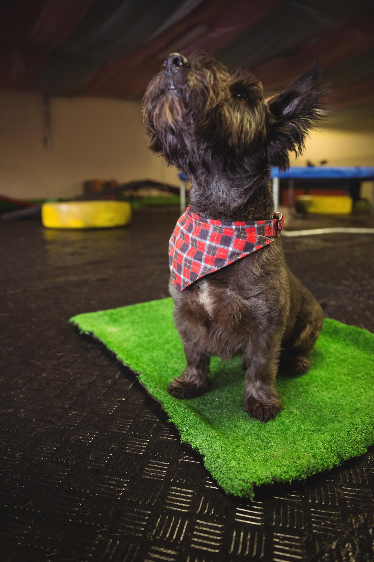 Shih tzu puppy sitting on mat and looking up #408819
