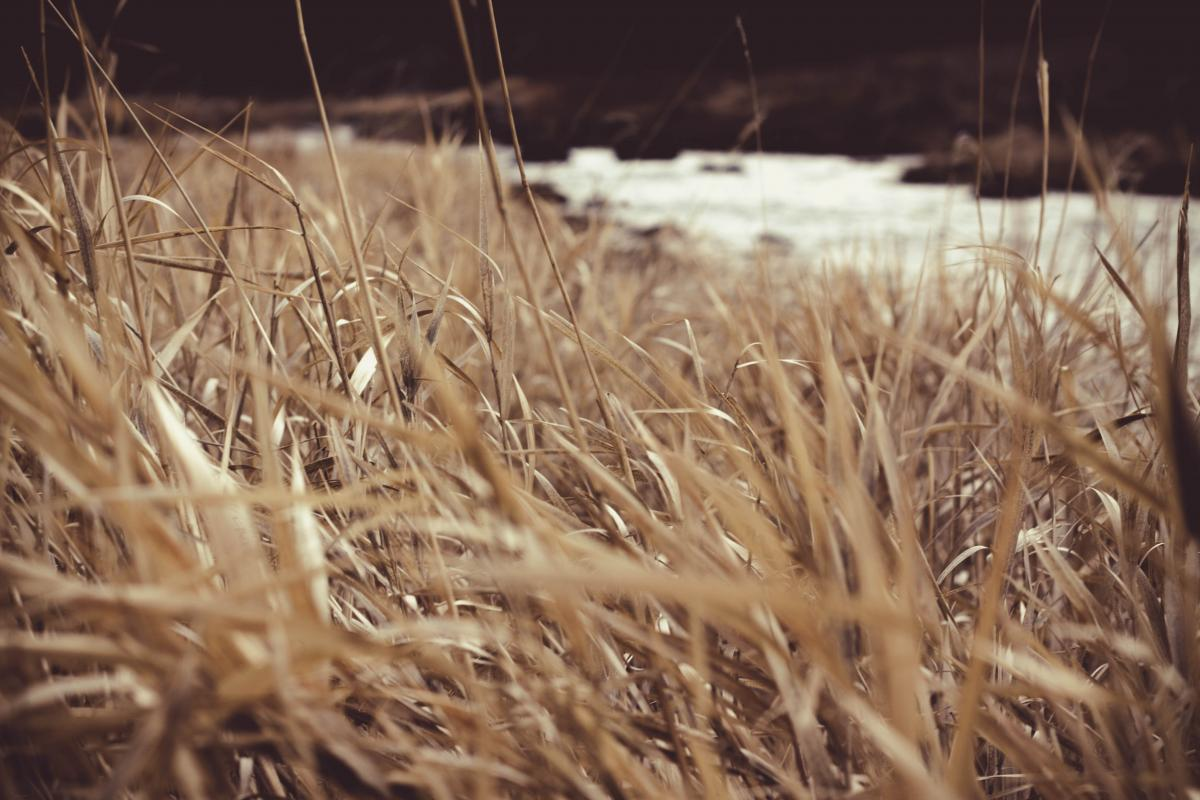 River Grass #409166