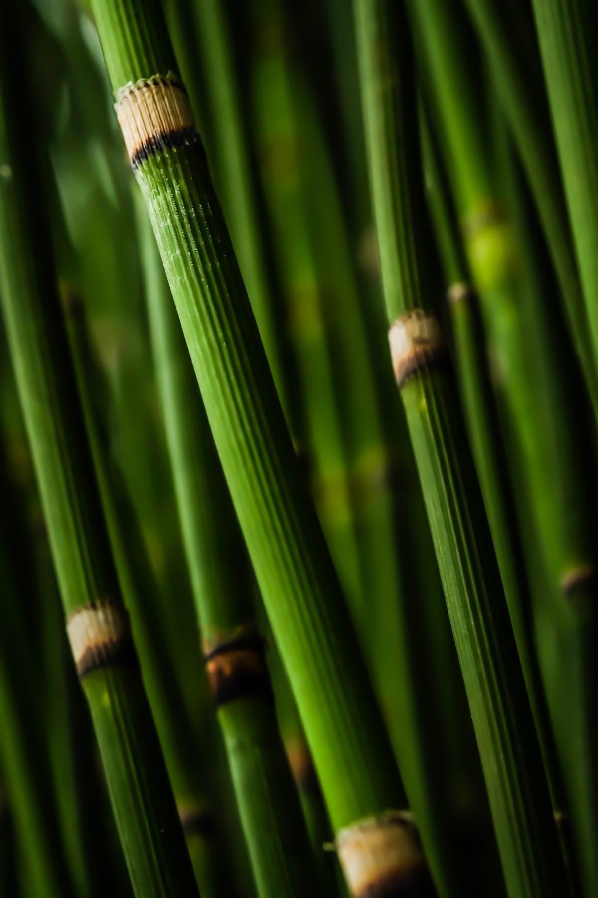 Bamboo tree close up green #40999