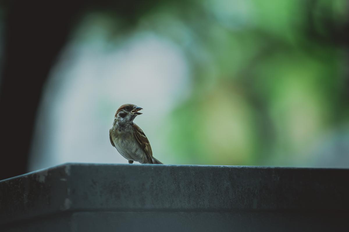 Brown Bird in Grey Concrete Wall