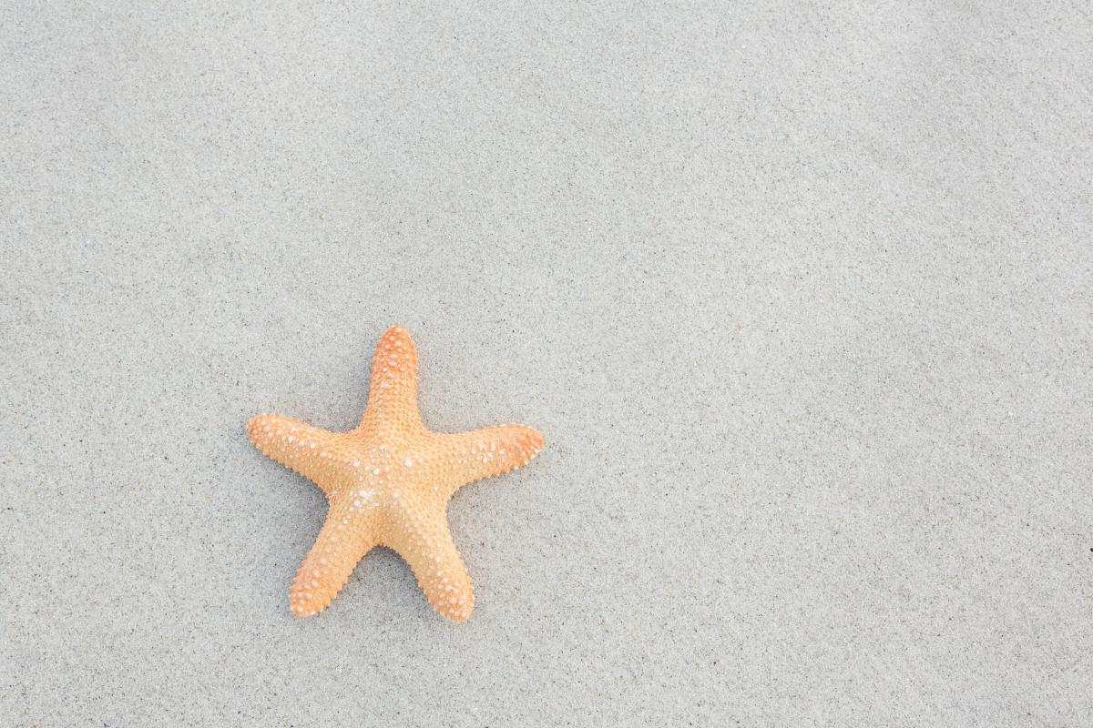 Starfish kept on sand #413962