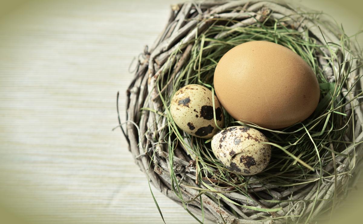 Egg Eggs Easter