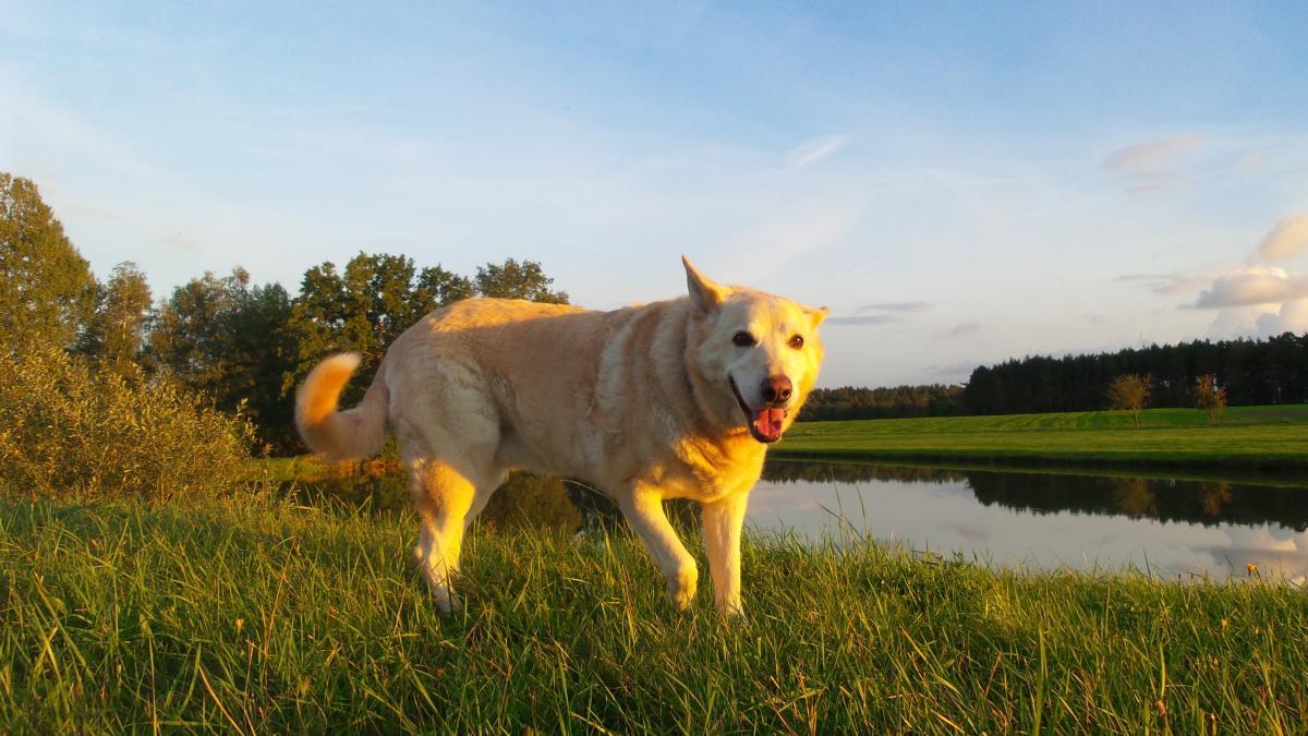Dog Farm Grass #416508