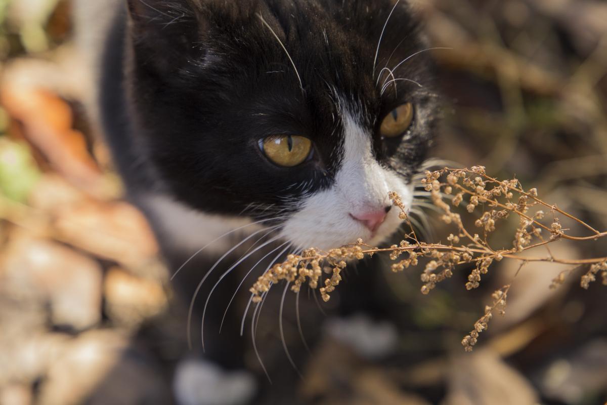 Kitten #416728