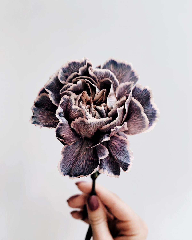 Plant Herb Dandelion