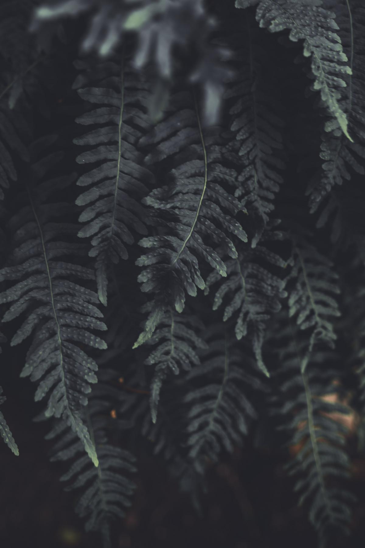 Fern Plant Feather star