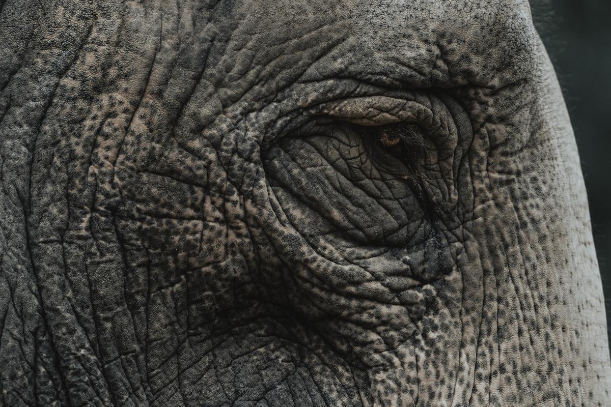 Elephant Mammal Safari