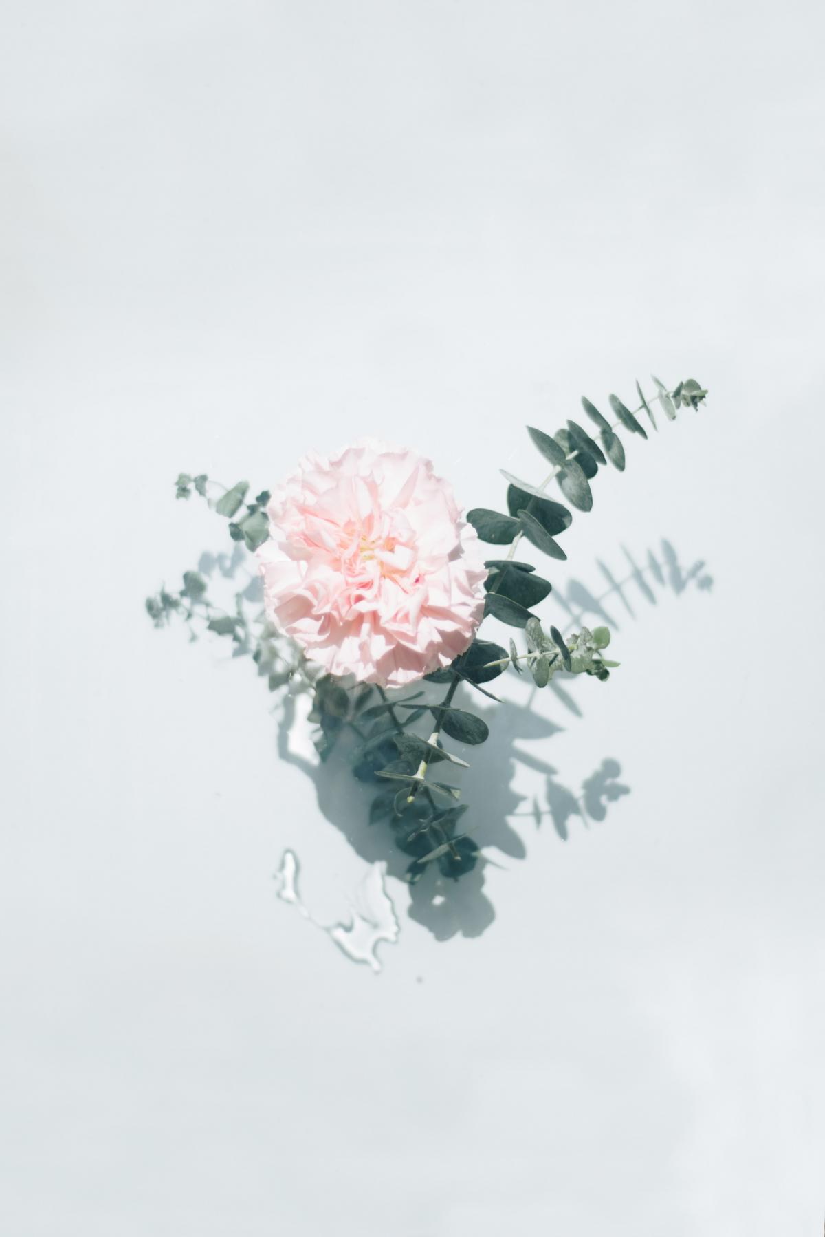 Floral Design Flower #419041