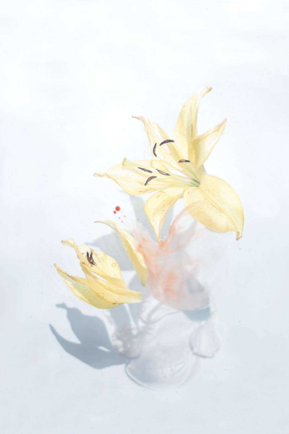 Floral Lily Flower