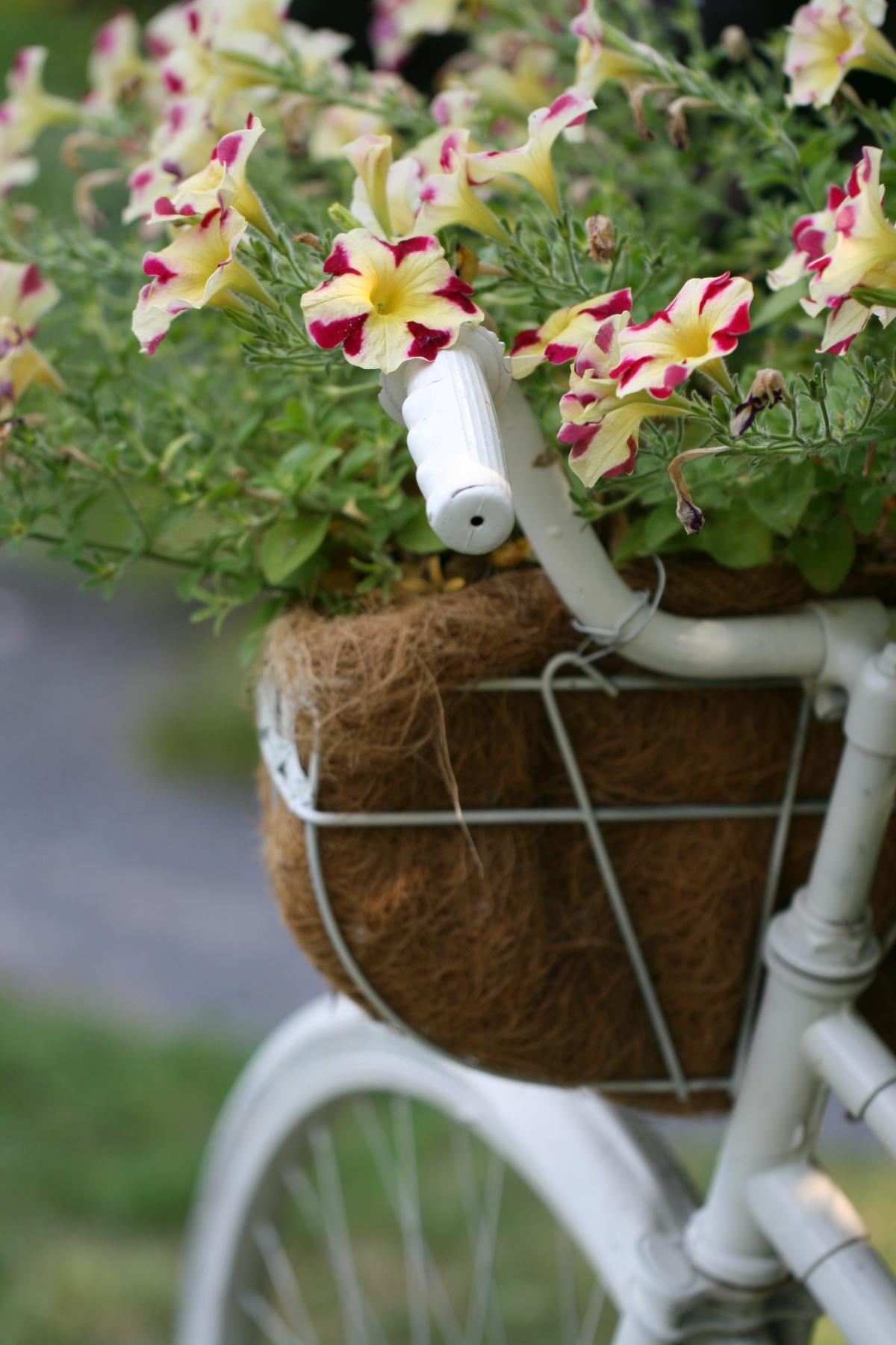 Pot Flower Container