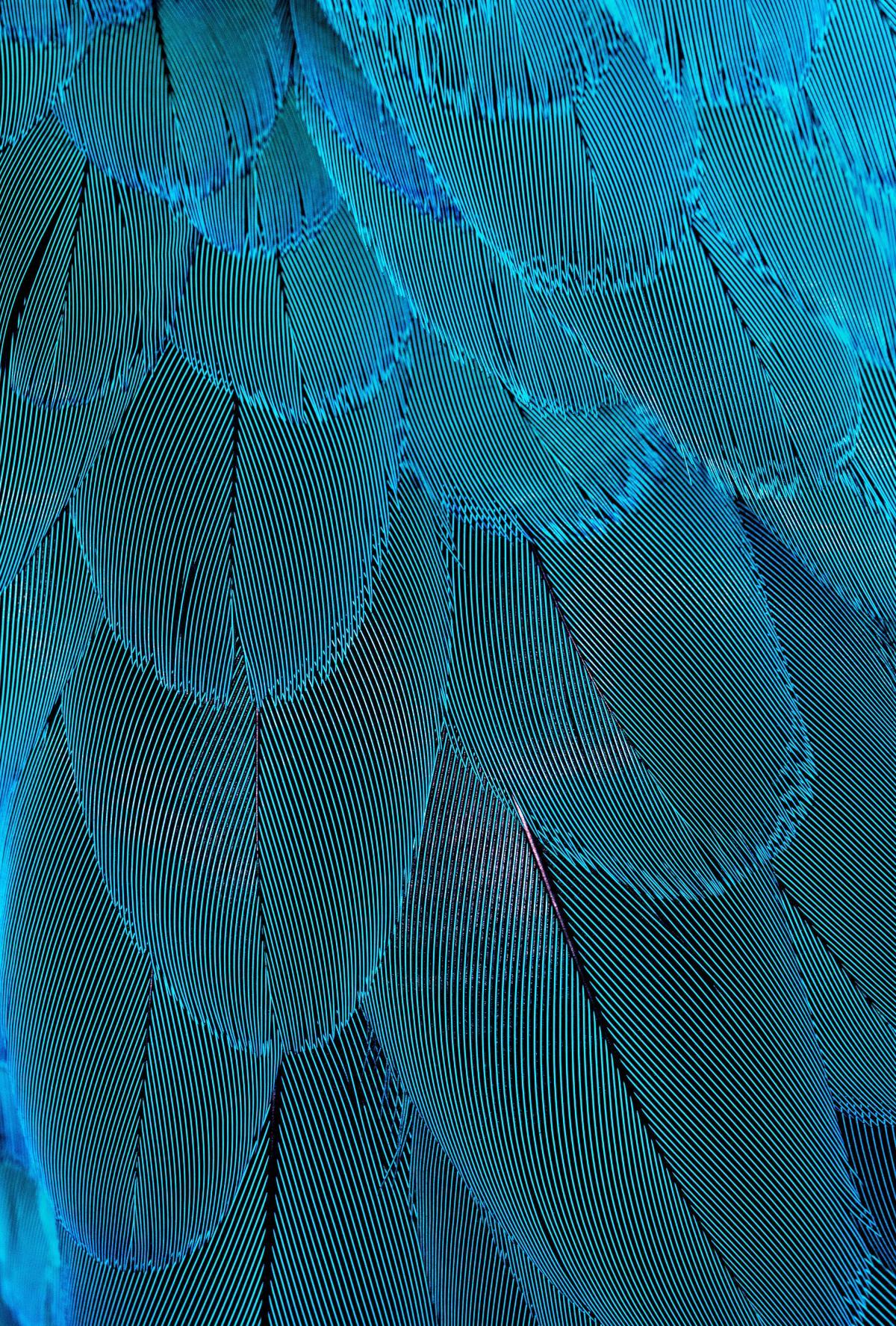 Spider web Web Cobweb