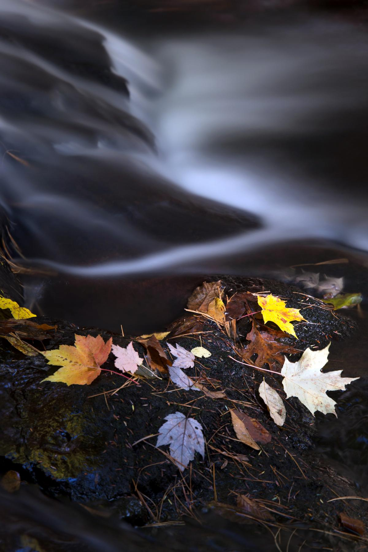 Autumn Leaves and River Free Photo