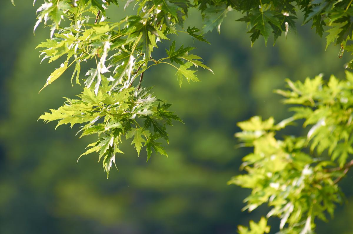 Tree Woody plant Plant