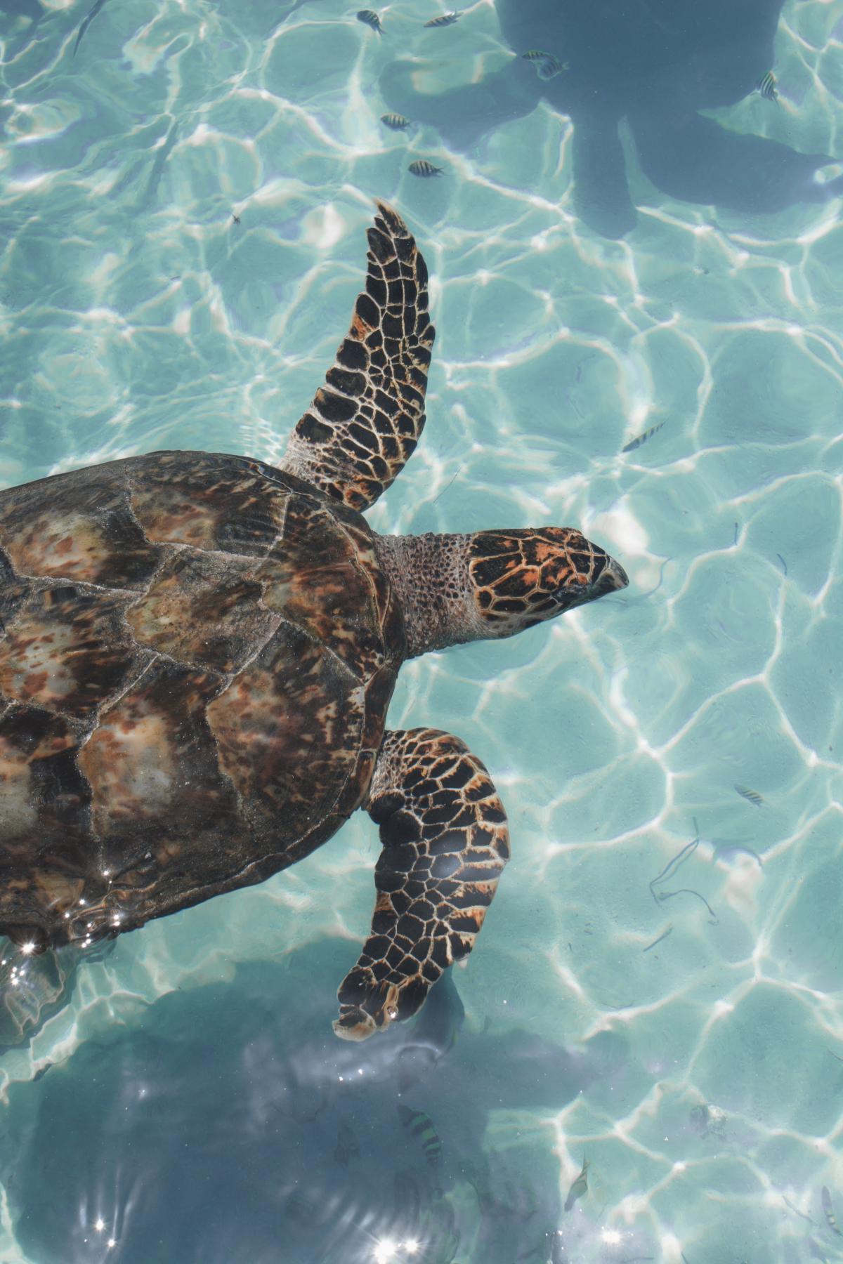 Loggerhead Sea turtle Turtle