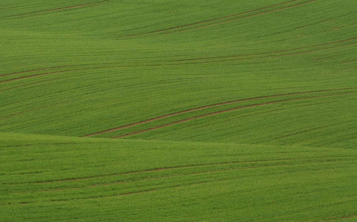 Wavy Green Field in Minimalist Style - Free Image For Commercial Use #419894
