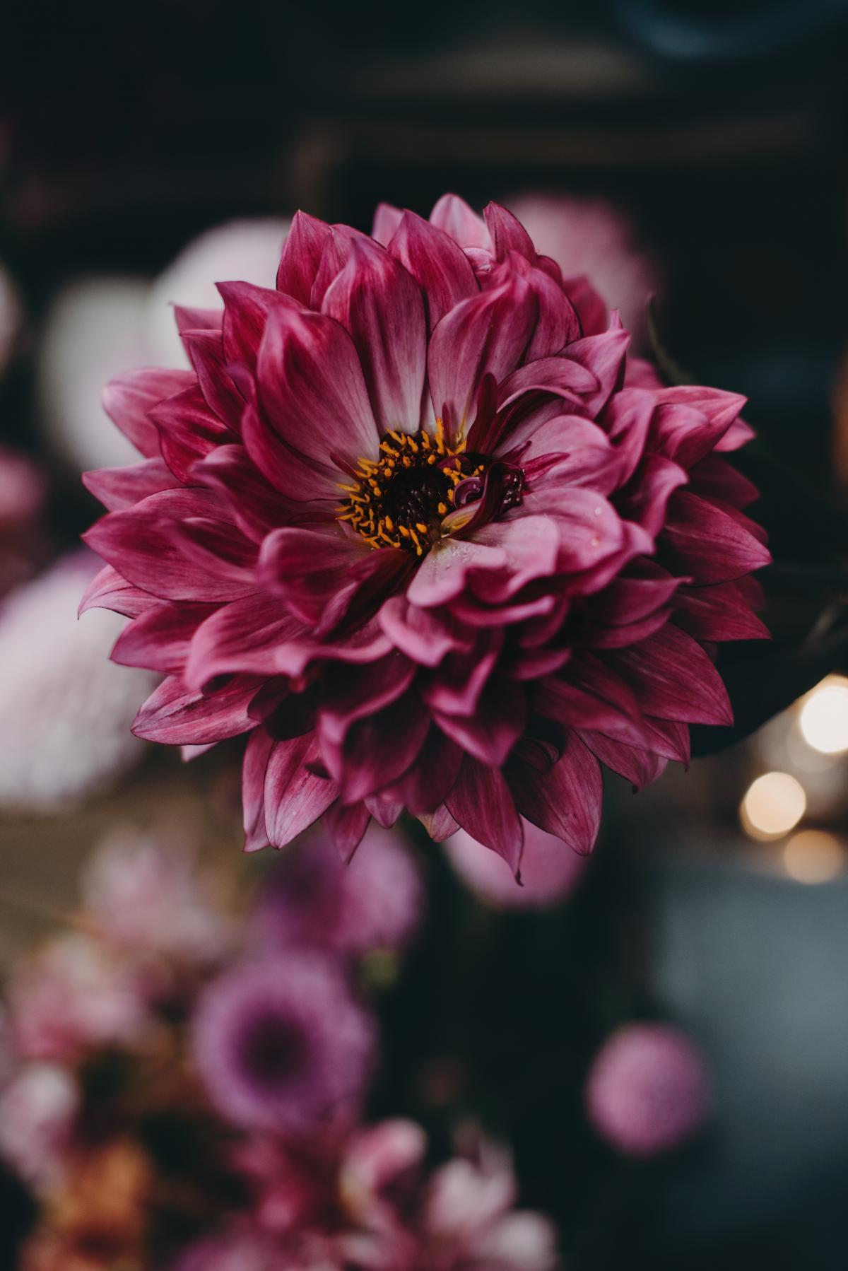 Petal Pink Flower