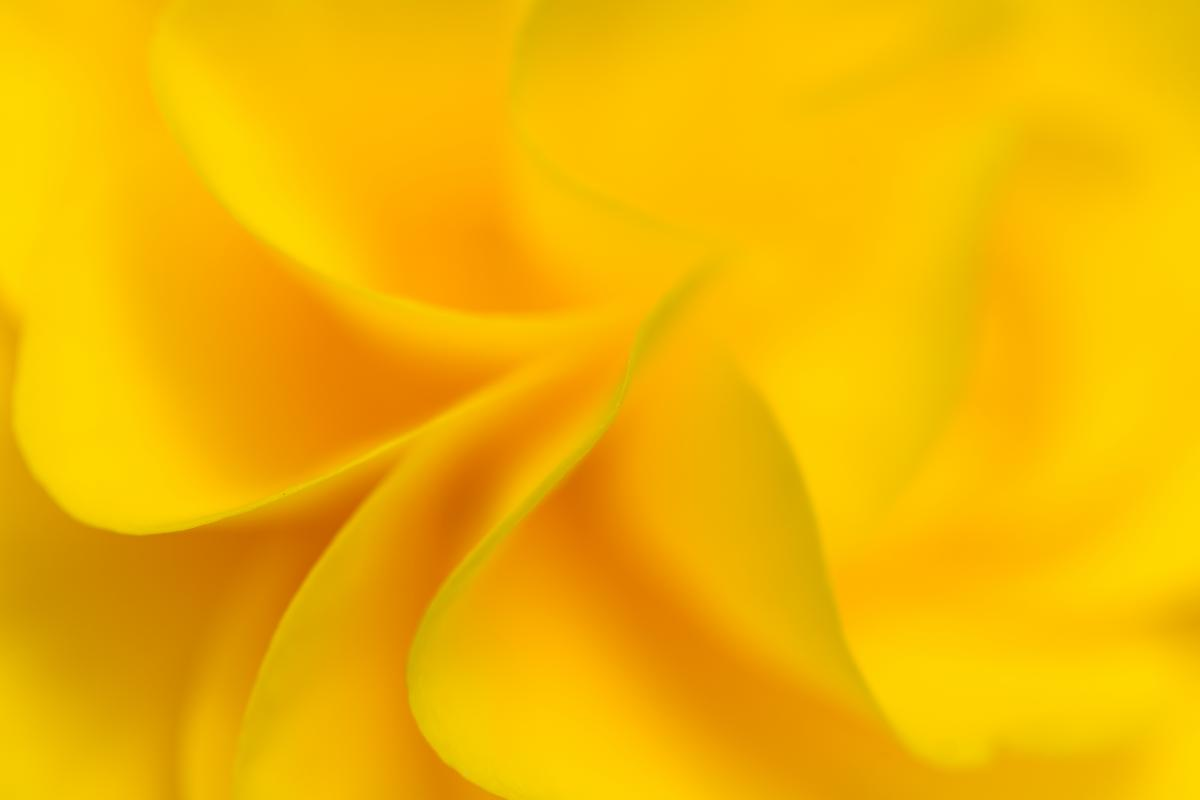 Yellow Flower Background Free Photo #420098
